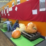 Pumpkins at Salmon Arm Fall Fair, Salmon Arm, BC Canada September 2013 Diana Walker photo